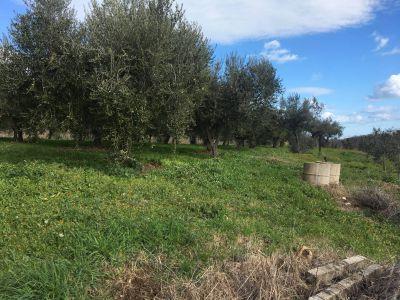 Ortona# Terreno Agricolo # Uliveto # Villa San Leonardo